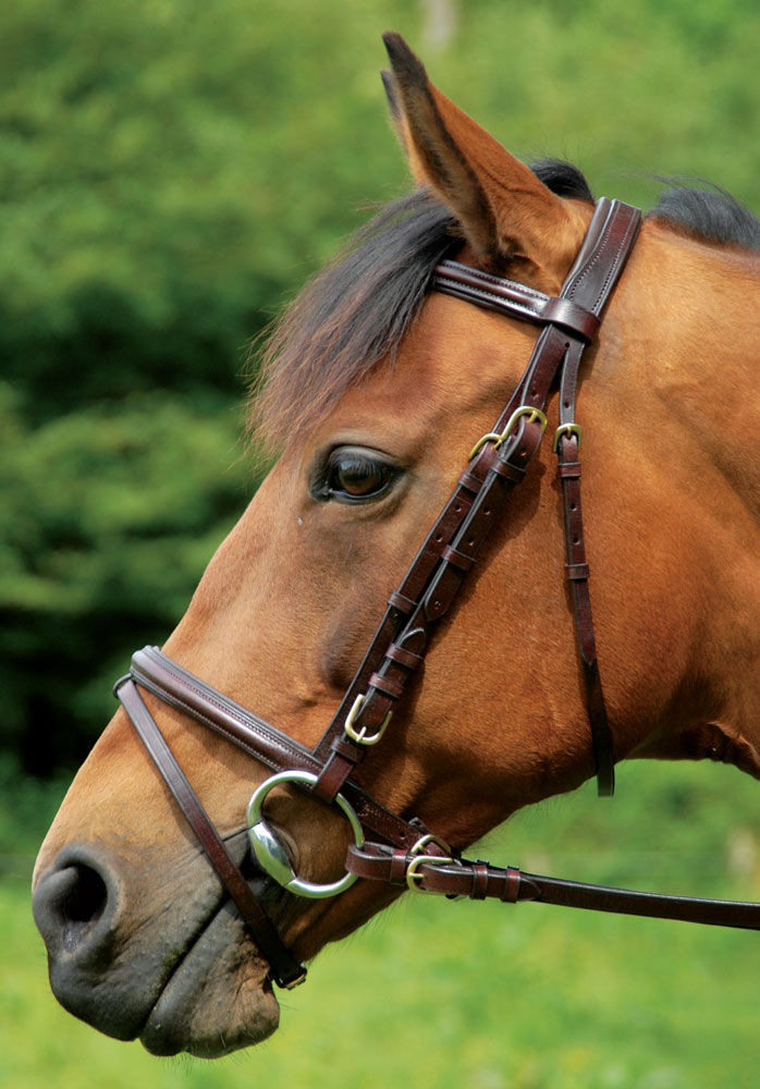 Home horse bridles and accessories bridles comfort bridle