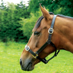 full-grain-leather-headcollar-001