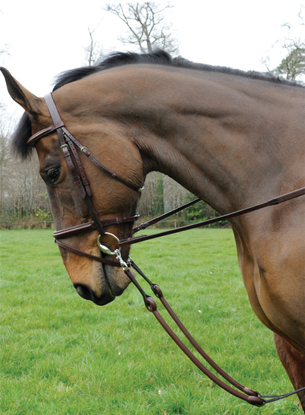 Bungee Martingale - Celtic Equine