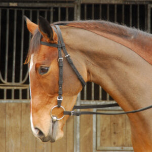 nylon-exercise-bridle-01